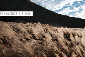 神奈川・仙石原すすき草原|東京から箱根へバス・電車で行く日帰り小旅行