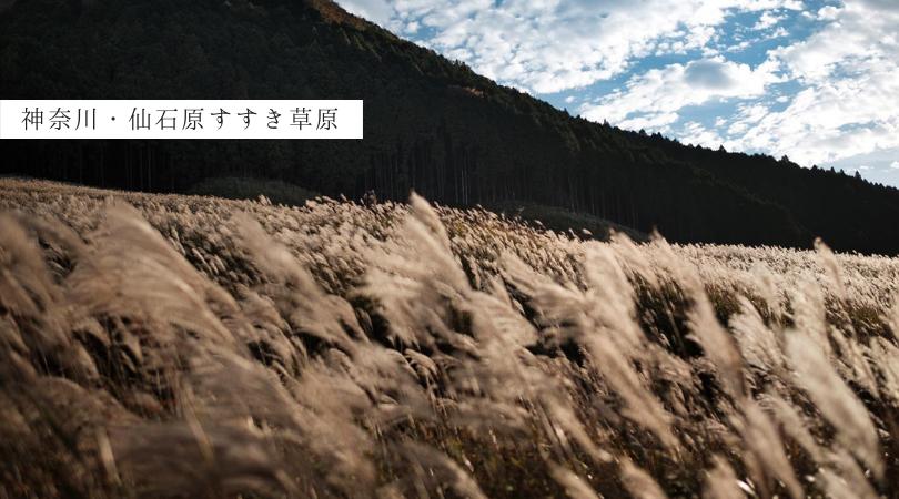 神奈川・仙石原すすき草原 東京から箱根へバス・電車で行く日帰り小旅行